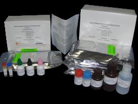 EIA-Test-kits-300x204